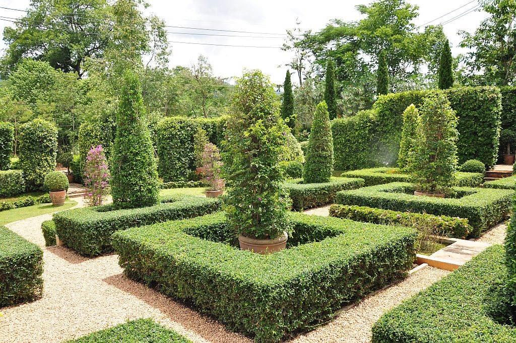 OREZIVANJE U JESEN: kako se orezuju živa ograda, ruže, tuje