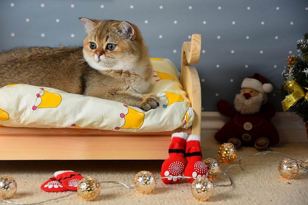 Krevet za mačku
